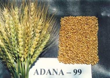Adana-99
