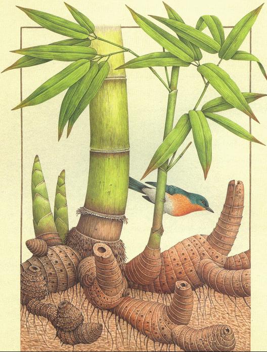 bambu nasıl yetiştirilir