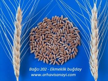 Bağcı-2002-Ekmeklik-buğday