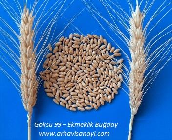 Göksu-Ekmeklik Buğday Çeşidi