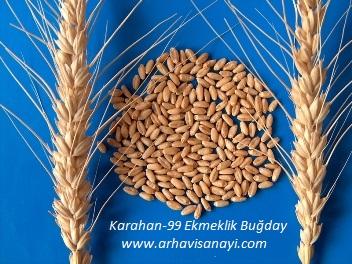 Karahan-99-Ekmeklik-Buğday