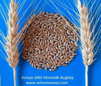 Konya-2002-Ekmeklik-Buğday çeşidi
