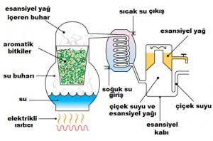 esansiyel yağ üretim şeması